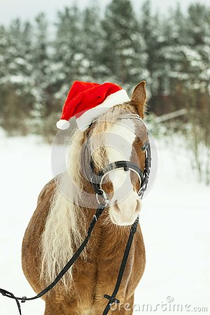 Free Portrait Nightingale Welsh Pony In A Christmas Red Cap In The Snow In The Woods Stock Photos - 130231663