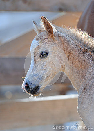 Free Portrait Of A Cute Foal Stock Photos - 65133283