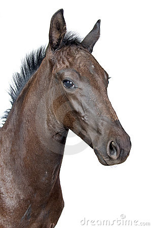 Free Portrait Of A Foal Stock Photography - 9763602