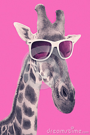 Free Portrait Of A Giraffe With Hipster Sunglasses Stock Photography - 53509792