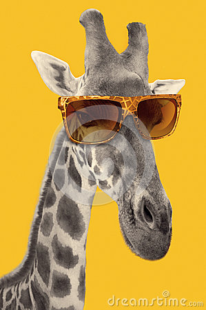 Free Portrait Of A Giraffe With Hipster Sunglasses Royalty Free Stock Image - 53509836
