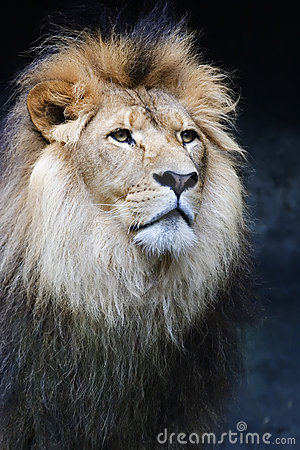 Free Portrait Of A King Royalty Free Stock Image - 643256