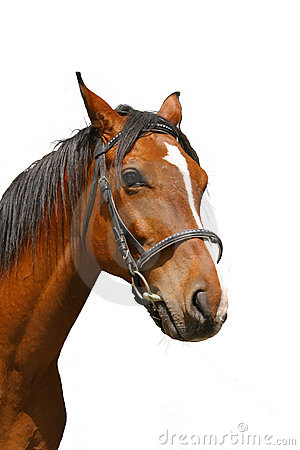 Free Portrait Of Brown Horse Stock Photography - 12461202