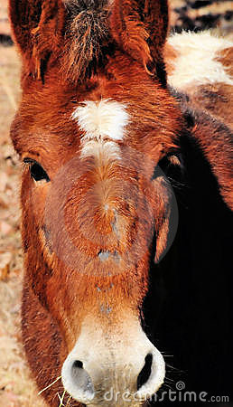 Free Portrait Of Brown Horse Stock Photography - 7706302