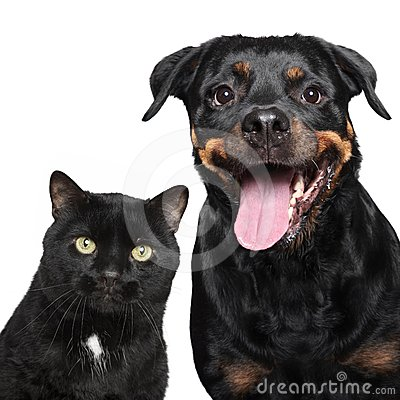 Free Portrait Of Cat And Dog On White Stock Images - 24387574