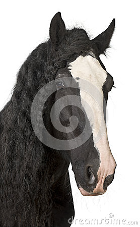 Free Portrait Of Shire Horse Royalty Free Stock Photo - 27269885