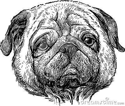 Portrait of the pug