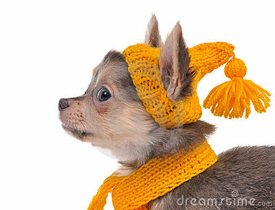 Picture link game. - Page 4 Portrait-of-puppy-with-yellow-hat-and-scarf-thumb17772544