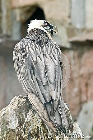 The Portrait of an sea-eagle