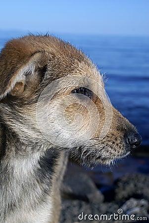 Portrait of shaggy pet