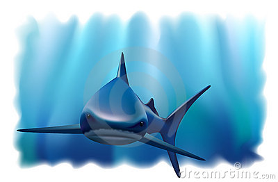 Portrait of a shark in the ocean.