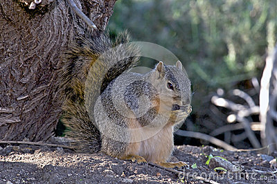 Portrait of a Squirrel Nibbling on a Nut