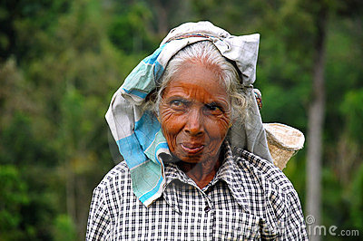 Portrait of Tamil Tea Picker Editorial Stock Image