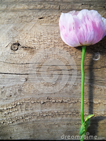 Free Portrait Texture Wood And Pink Flower Background Royalty Free Stock Photography - 41595317