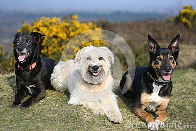 Portrait of three dogs on grass