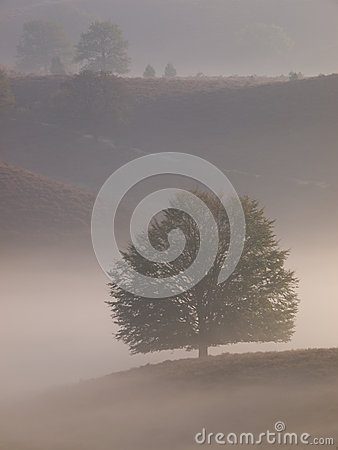 Portrait tree silhouette on hill