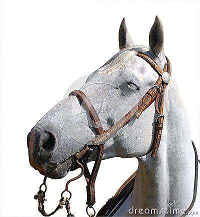 Portrait View of a Cowboy s Horse