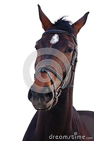 Portrait von Schacht Stallion getrennt