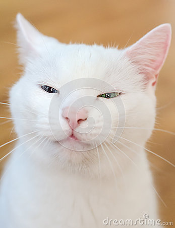 Portrait of white funny cat