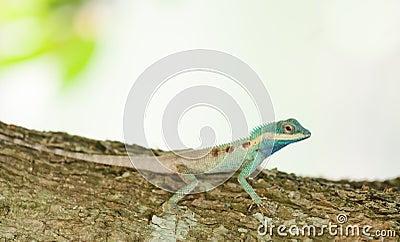 The portrait of wild lizard