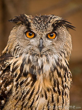 Portrait of wise owl