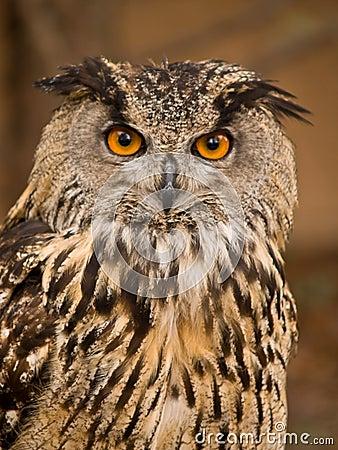 Portrait of wise owl