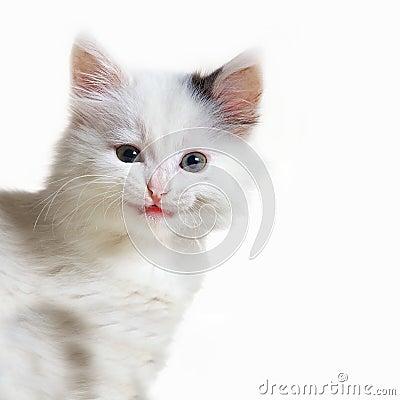 Portrait of withe cat