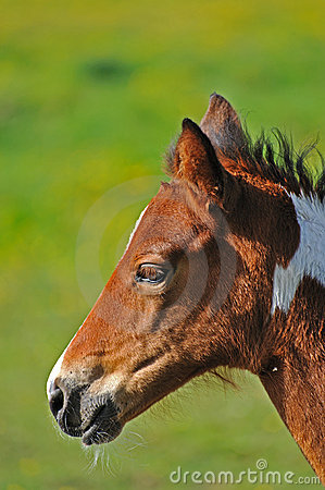 Portrait of young foal