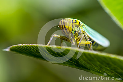 Portrait of a young grasshopper