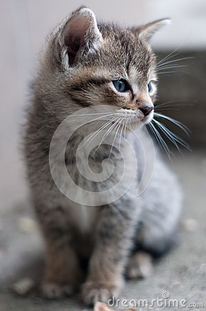 Portrait of young kitty