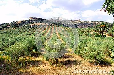 Portugal, area of Alentejo, Evoramonte landscape