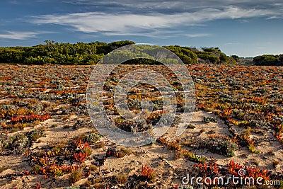 Portugal Coast vegetation