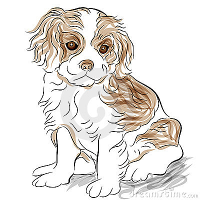 Posed Cavalier King Charles Spaniel Puppy Dog