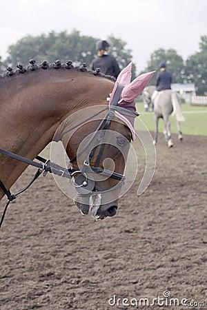 Posh horse