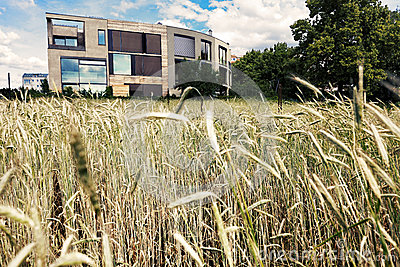 Post-Modern Architecture Behind Wheat Field