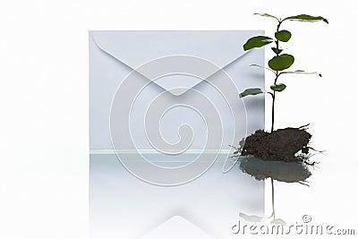 Post und Grünpflanze