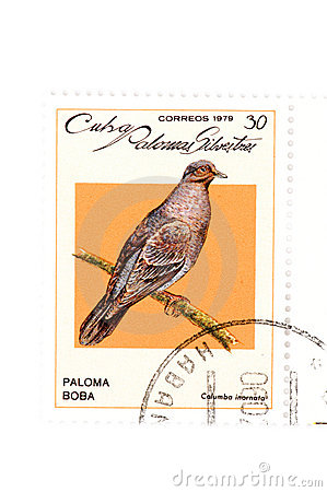 Postage stamp bird close up