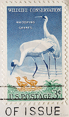 Postage Stamp Whooping Cranes