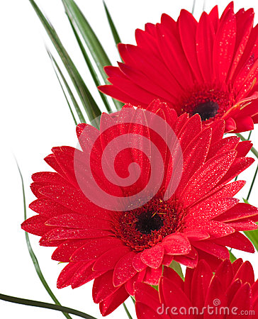 Free Postcard From Gerberas Stock Photo - 32936470