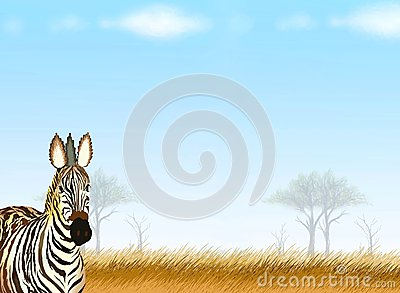 Postcard and Note Paper of A Zebra in Safari