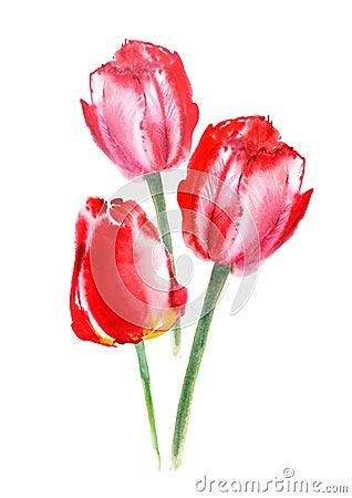 Postcard of a tulip flowers. Cartoon Illustration