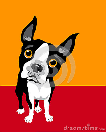Poster layout with Boston Terrier