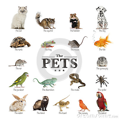 Free Poster Of Pets In English Royalty Free Stock Photography - 39622707