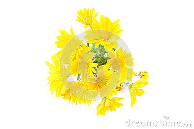 Posy arrangement  of yellow chrysantemum