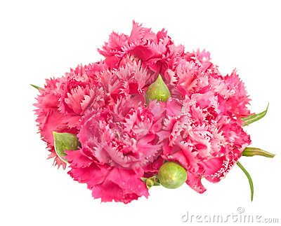 Posy of pink carnations spring flower