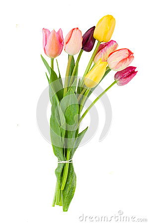 Posy of tulips flowers