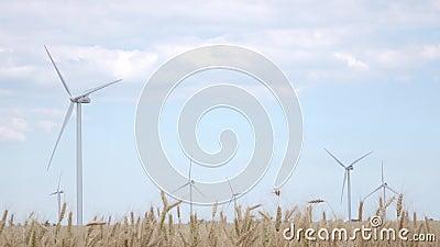 Potężne turbina wytwarzają elektryczność na nieba tle otaczającym żółtymi pszenicznymi ucho zdjęcie wideo