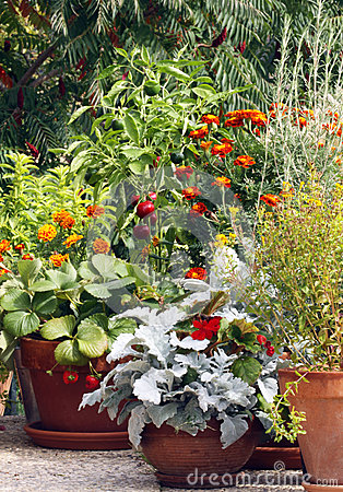Pot and container gardening on the terrace or balc