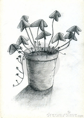 POT di fiore