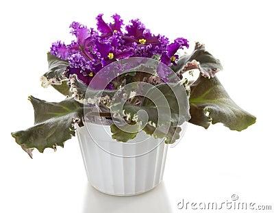 Pot flower